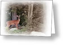 Male Whitetail Deer Greeting Card