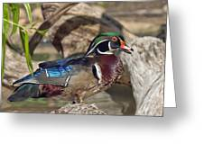 Male Wood Duck Dwf029 Greeting Card