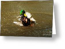 Mallard Bath Time Greeting Card