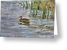 Mallard By The Reeds Greeting Card