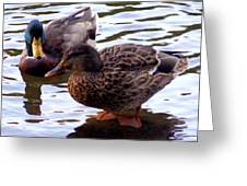 Mallard Drake And Hen Greeting Card