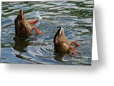 Mallard Duck Butts Greeting Card