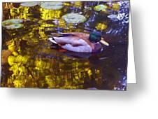 Mallard Duck On Pond 2 Greeting Card