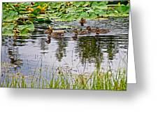Mallard Ducks In Heron Pond In Grand Teton National Park-wyoming  Greeting Card