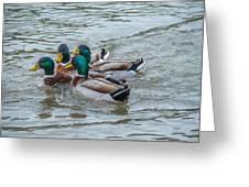 Mallard Ducks In Vee Formation Greeting Card