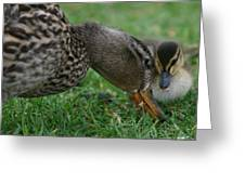 Mallard Hen And Duckling Greeting Card