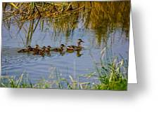 Mallard Hen And Ducklings Greeting Card