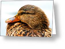 Mallard Hen Close Up Greeting Card