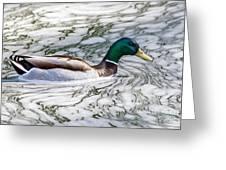 Mallard In Froth Greeting Card