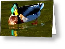 Mallard Male Duck Greeting Card