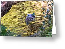 Mallard Pair Greeting Card