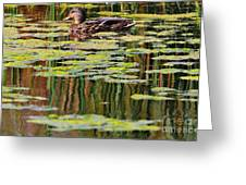 Mallard Pond Greeting Card