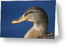 Mallard Queen Greeting Card