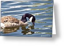 Mallard Reflection Greeting Card