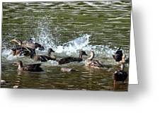 Mallard Water Party 2 Greeting Card