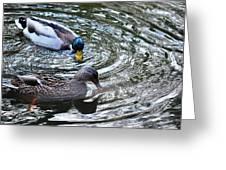 Mallards In The Creek Greeting Card