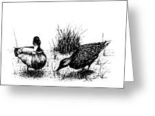 Mallards In The Marsh Greeting Card