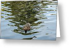 Mallards On Golden Pond 4 Greeting Card