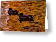 Mallards On Golden Water Greeting Card