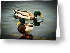 Mallards On Mendota Greeting Card by Christi Kraft