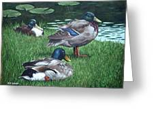 Mallards On River Bank Greeting Card by Martin Davey