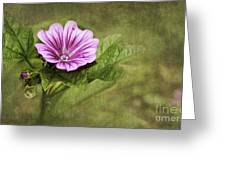 Mallow Hollyhock Greeting Card