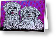 Maltese Duo Pink Bg Greeting Card