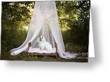 Maltese Princess Greeting Card by Andrea Auletta