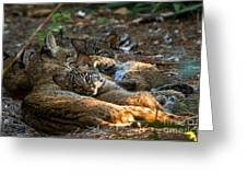 Mama And Her Babies  Greeting Card