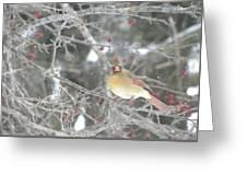 Mama Cardinal Greeting Card