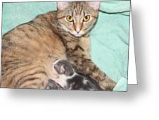 Mama Cat And Her Kittens Greeting Card