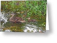 Mama Duck And Baby Greeting Card
