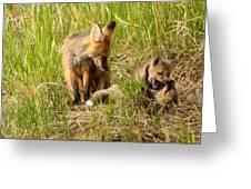 Mama Fox And Kits 2 Greeting Card