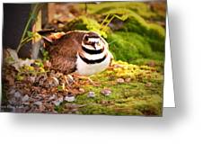 Mama Protecting Eggs Greeting Card