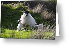 Mama Sheep And Her Two Lambs Greeting Card