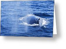 Mama Whale Greeting Card