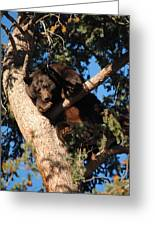 Mama's In The Tree Greeting Card