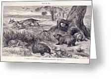 Mammals Of Tasmania Greeting Card