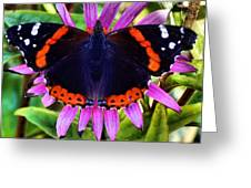 Mammoth Butterfly Greeting Card