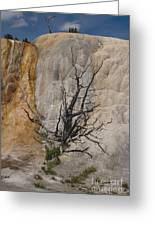 Mammoth Formation  #0290 Greeting Card