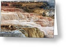 Mammoth Hot Springs Terracaes Greeting Card