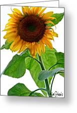 Mammoth Sunflower Greeting Card