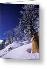 Man Skiing Through Trees In Fresh Greeting Card