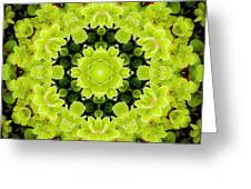 Manadala97 Greeting Card