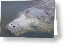 Manatee Face Greeting Card