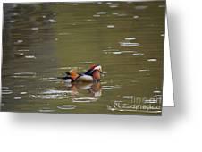 Mandarin Duck 20130507_99  Greeting Card