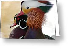 Mandarin Duck And Wood Duck Greeting Card