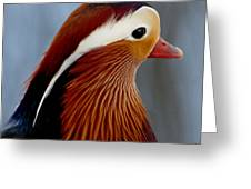 Mandarin Duck Greeting Card