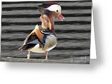 Mandarin Duck Greeting Card