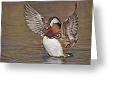 Mandarin Duck Flapping Away Greeting Card